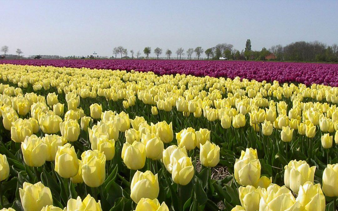 Bloembollen voor een stralend voorjaar.