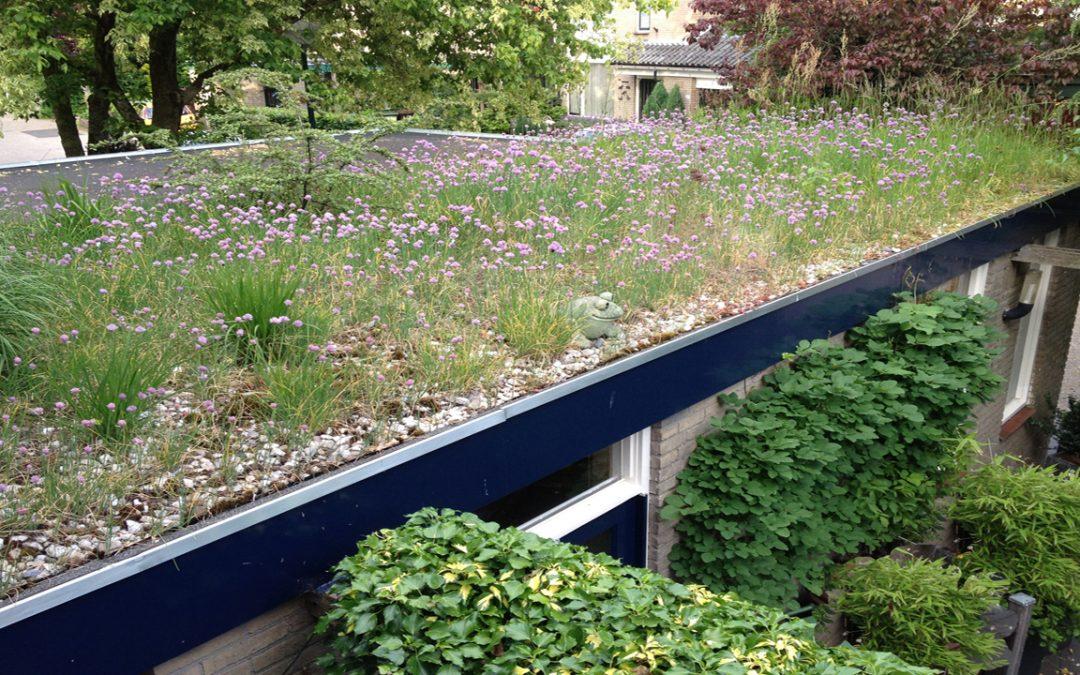 Subsidie voor dak-en gevelgroen.