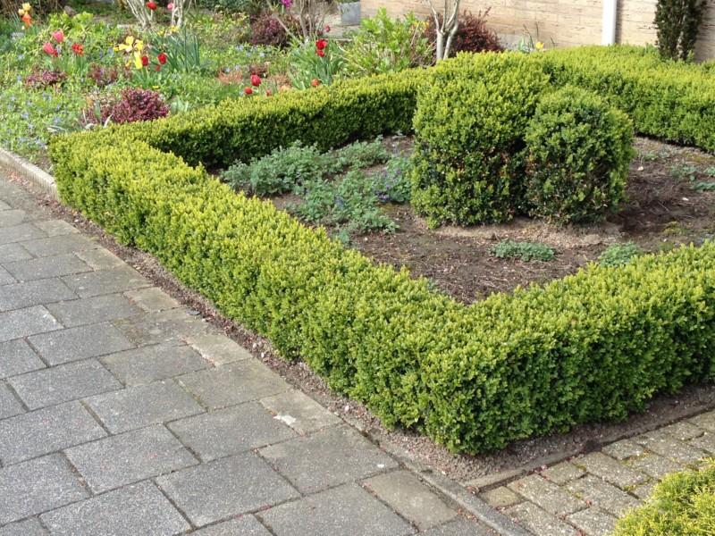 Tuin Hagen Soorten : Het tuinelement van je tuin spannend maakt