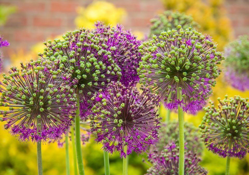 Kleurrijke Bloemenborder in een Kleine Voortuin