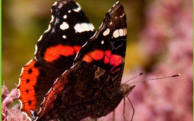 De voordelen van een duurzame tuin