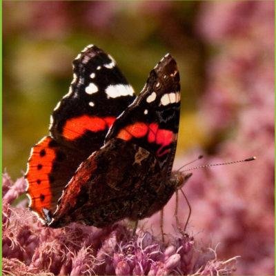 de voordelen van een duurzame tuin tuincursus online