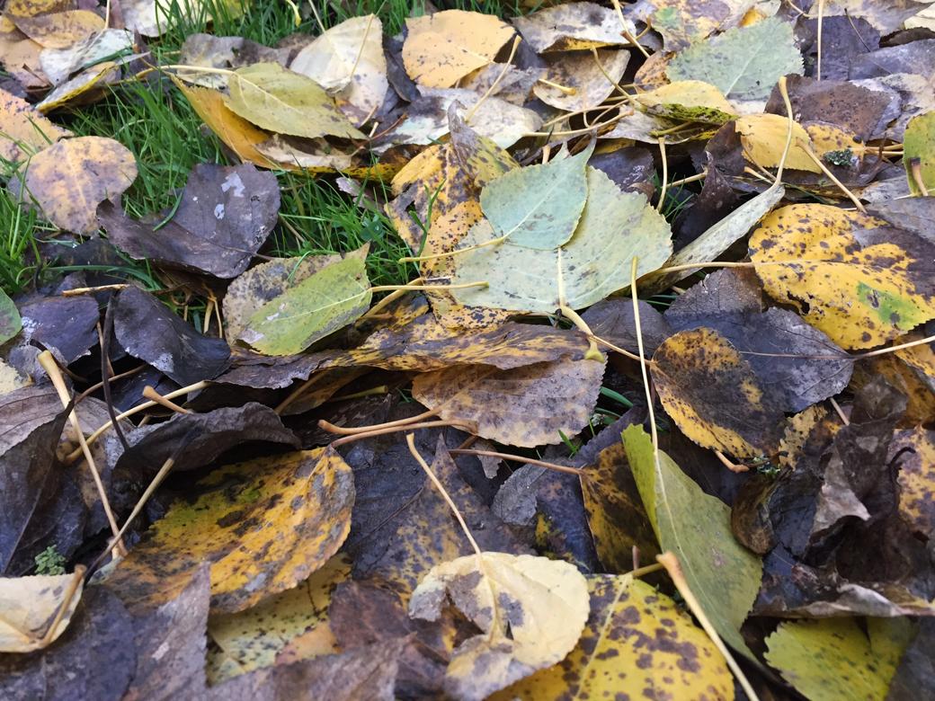 herfstblad op het gazon tuincursus online