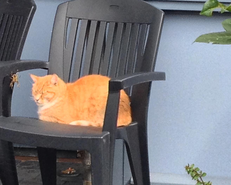 Katten In De Tuin Houden Of Weren