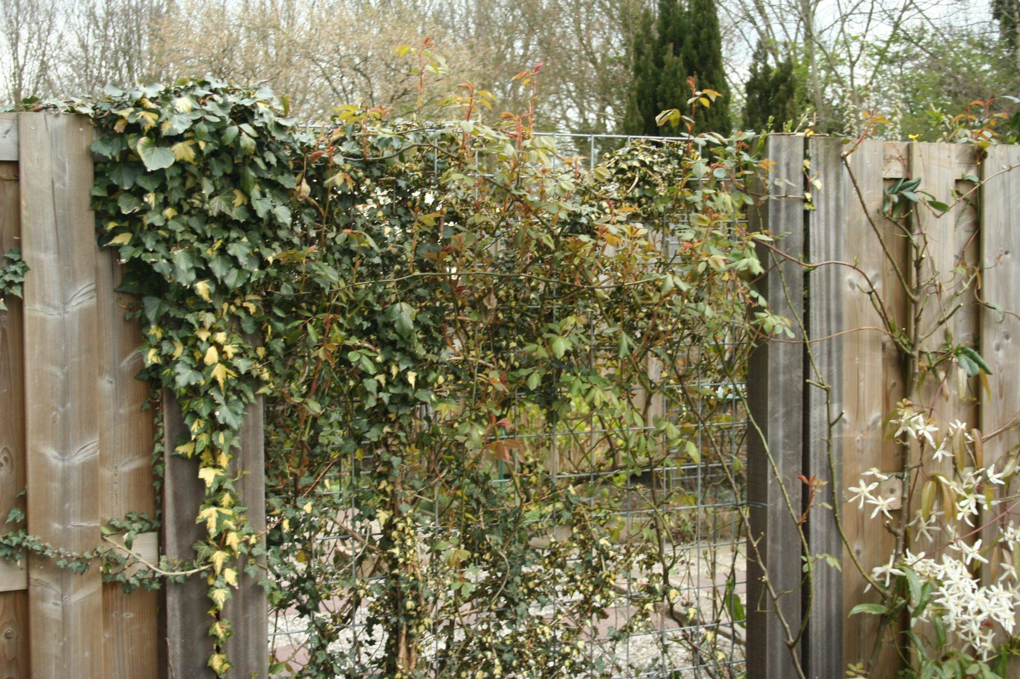 boom van buren snoeien