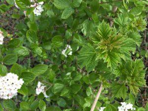 blad van wildgroei tuincursus online