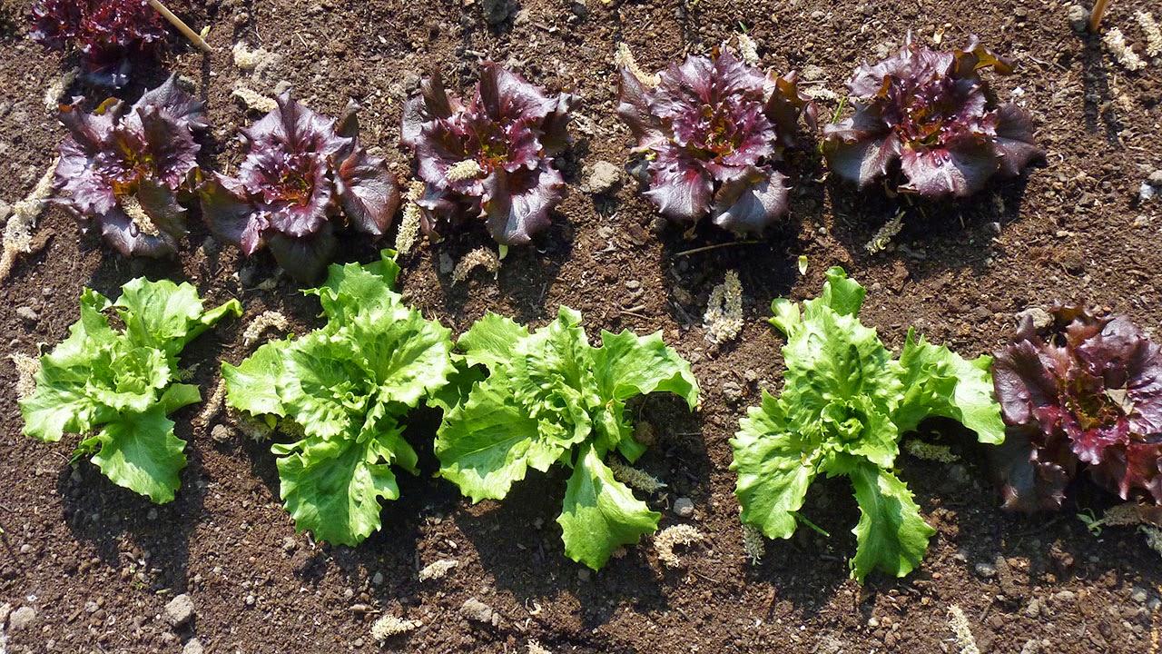 eten uit eigen tuin tuincursus online