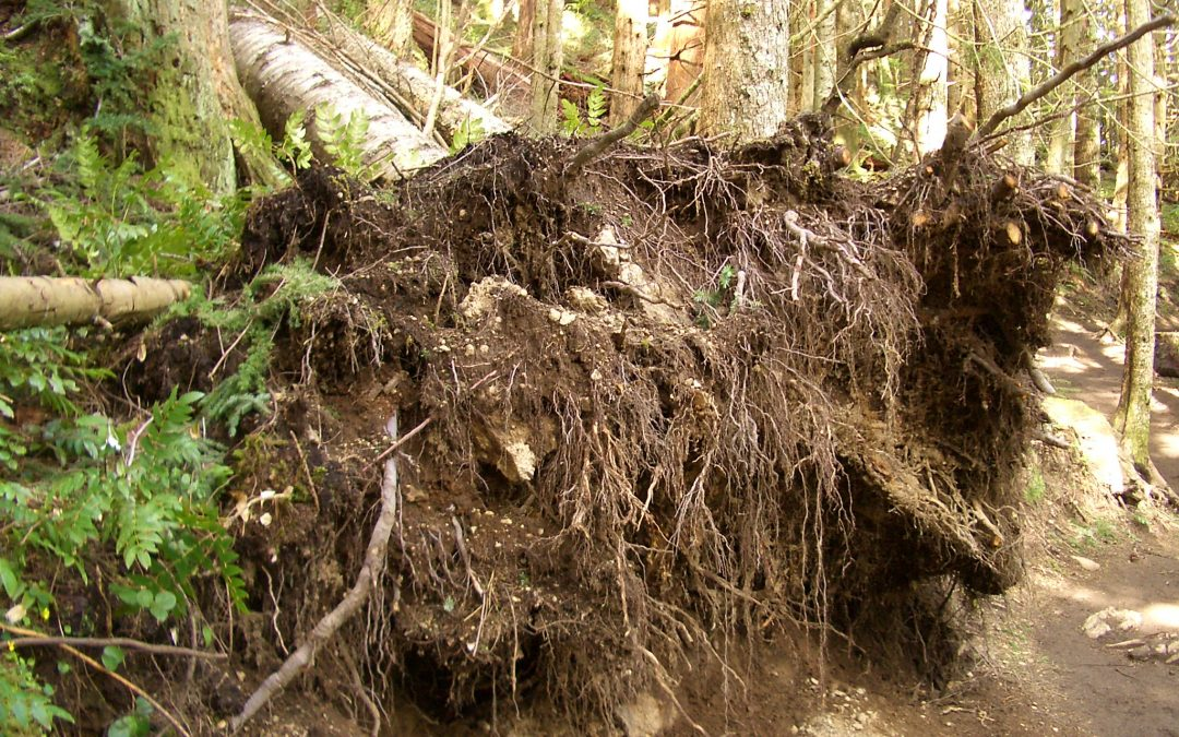 Geheimen van het bodemleven