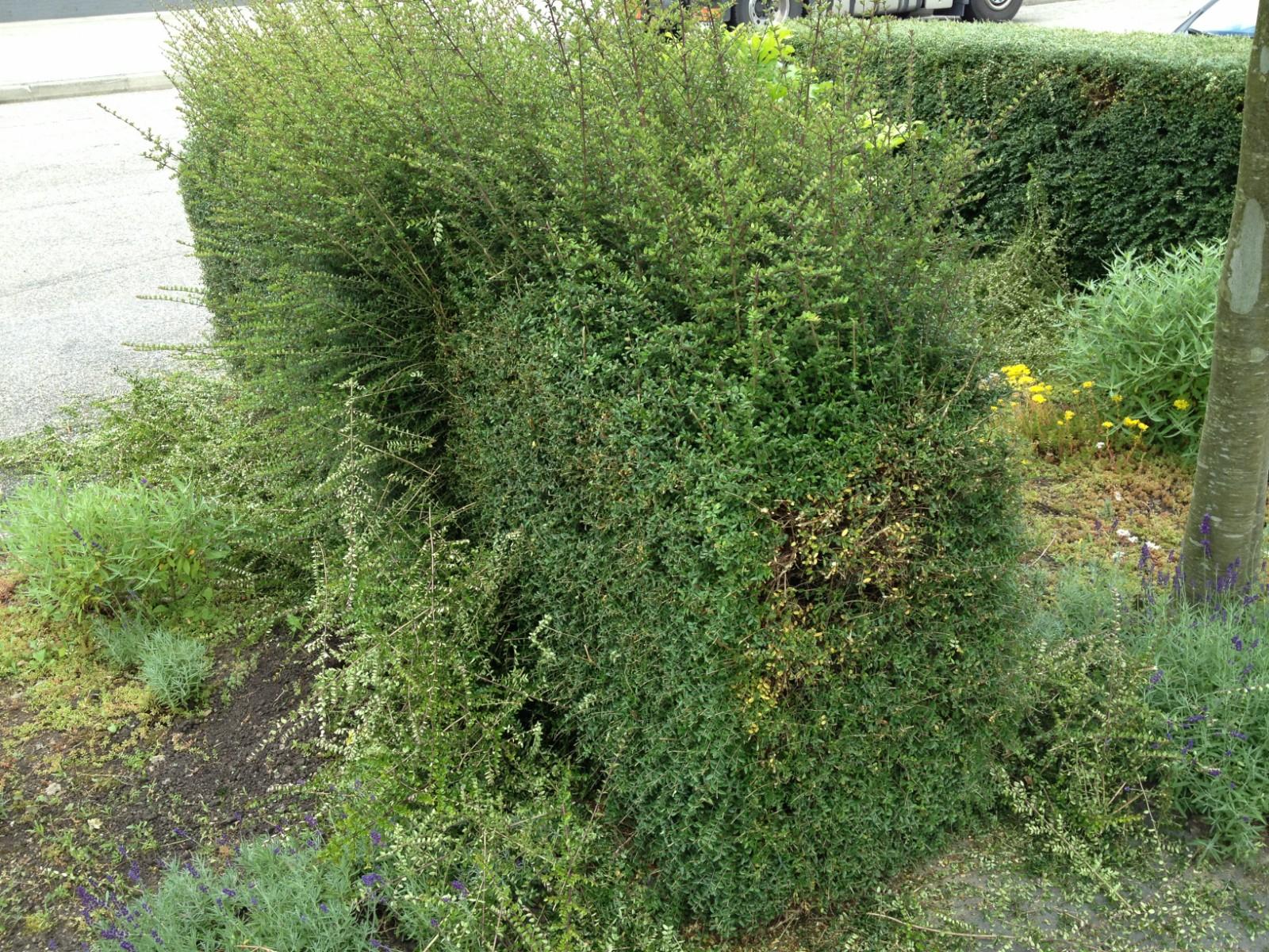 haag deels geknipt tuincursus online
