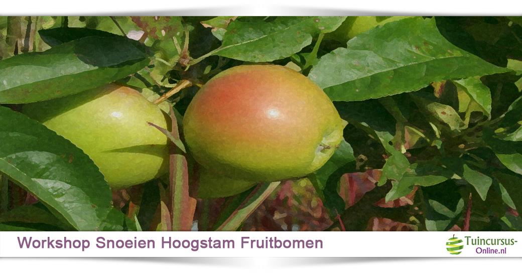 workshop fruitbomen snoeien