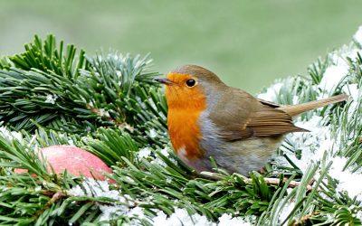 vogels in de wintertuin
