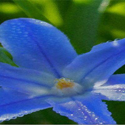 lezing natuur in de tuin tuincursus online