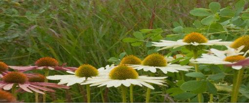 workshop beplantingsplan maken tuincursus online