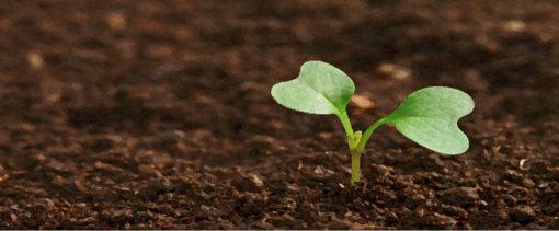 bodemleven en composteren bij tuincursus online