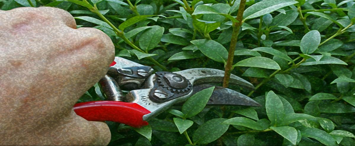 voorjaarsonderhoud snoeien tuincursus online
