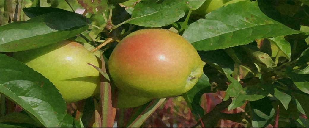workshop snoeien hoogstam fruitbomen tuincursus online