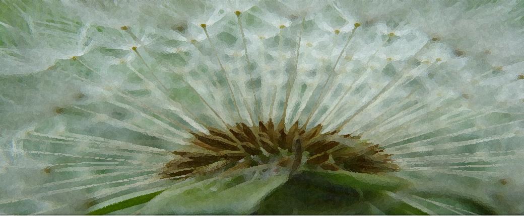 tuinspreekuur het groene hart
