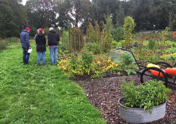 Wildplukken bij de tuin van Brassica met tuincursus online