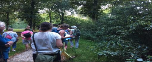 cursus wildplukken in tuin en landschap tuincursus online