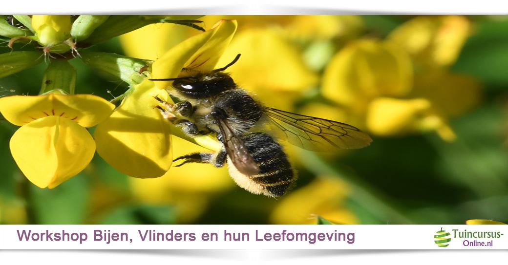 Schaduwplanten voor vlinders en bijen.