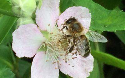 Bijen, vlinders en hun leefomgeving